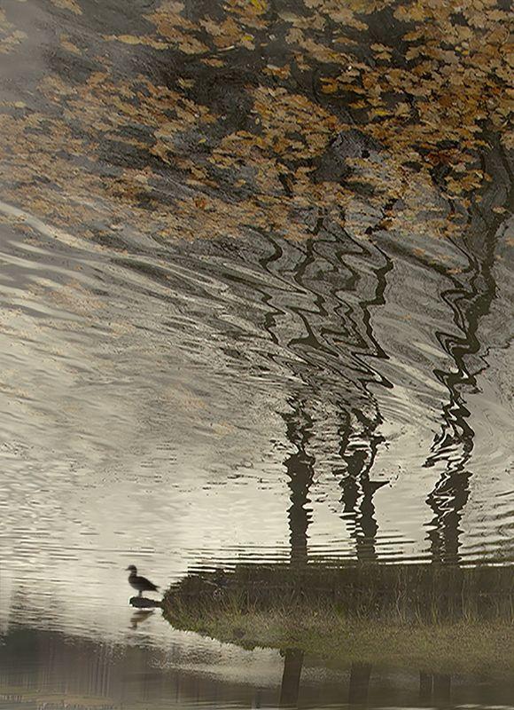 Гонит ветер осенние листьяphoto preview