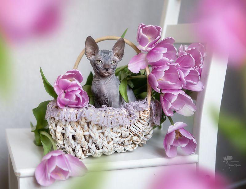 Мартовский котик...photo preview