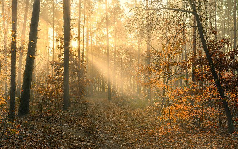 landscape, пейзаж, утро, лес,  деревья, солнечный свет,  солнце, природа, осень осенние картинкиphoto preview