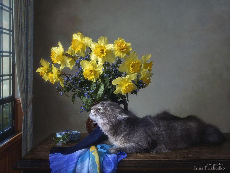 натюрморт, котонатюрморт, постановочная фотография, домашние животные, кошка Масяня, весна, букет, нарциссы - А за окном весна!photo preview