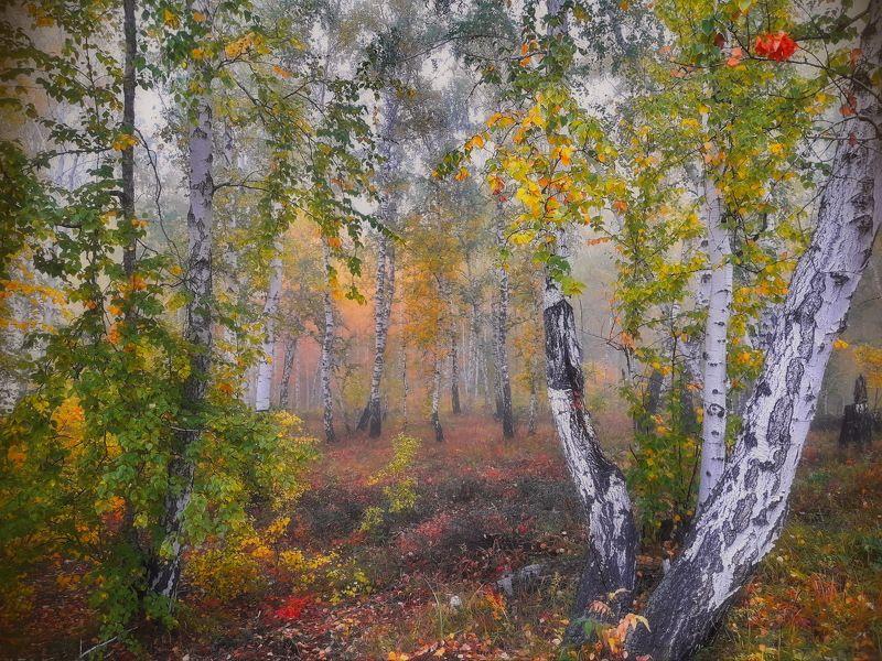 пейзаж,туман,сентябрь,лес Утро, туманphoto preview