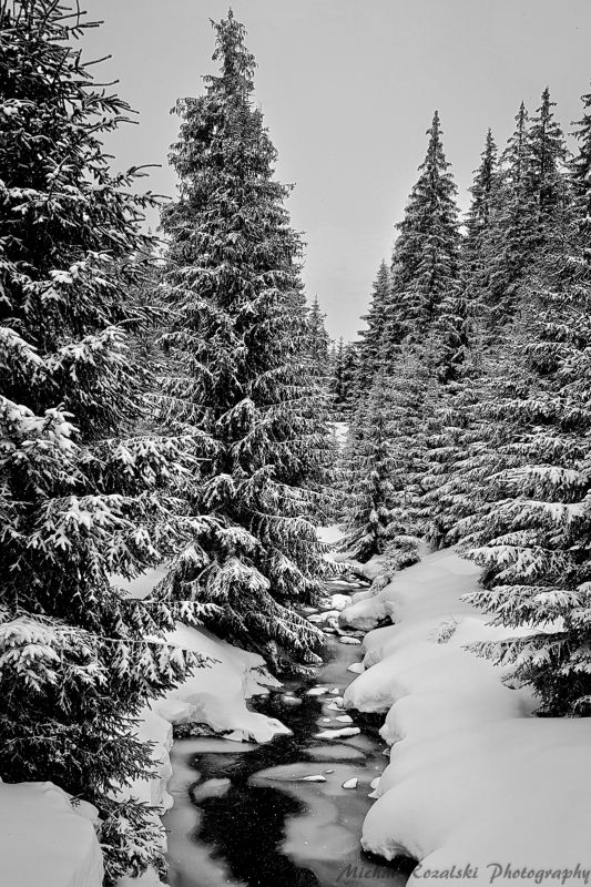 winter, ,season, ,blackandwhite, ,snow, ,landscape, ,trees, ,stream, ,photography Charming snowy winterphoto preview