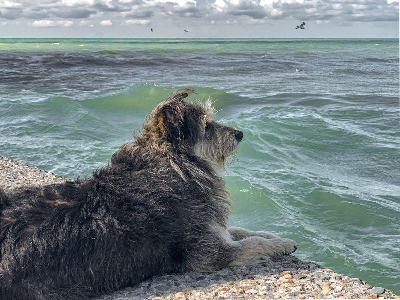 Пёс и мореphoto preview