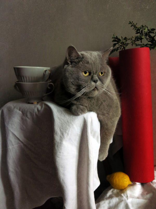 Кот и лимонphoto preview