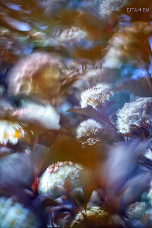 весна, spring, цветы, цветок, flowers, flower, blossom, bloom, розовый, pink, боке, bokeh, макро, macro, closeup, background Цветочный импрессионизм / The Flower Impressionismphoto preview