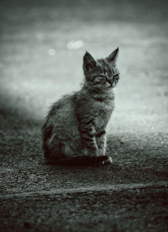 кот, коты, котёнок, кошка, кошки, медитация meditationphoto preview