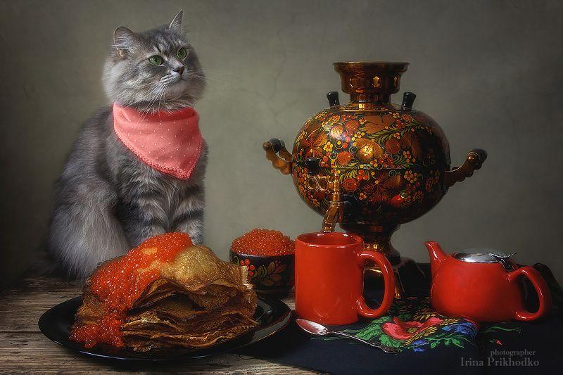 натюрморт, масленица. блины, икра, кошка Масяня, самовар, постановочное фото, котонатюрморт Щедрая Масленицаphoto preview