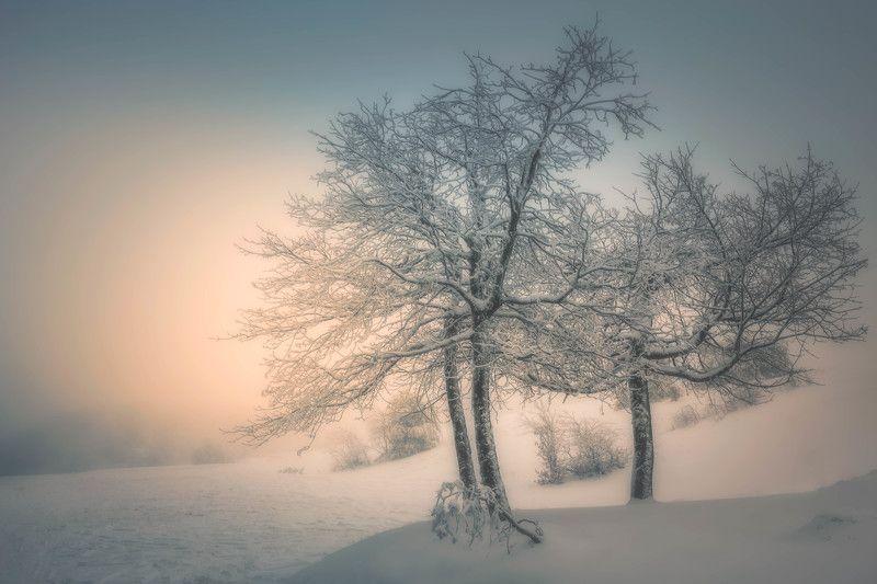 #landscape#nature#winter#fog#snow#sunrise#dream Moment in timephoto preview
