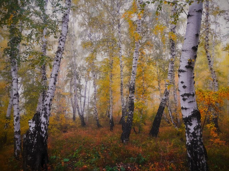 пейзаж,туман,сентябрь,лес Берёзоньки..photo preview