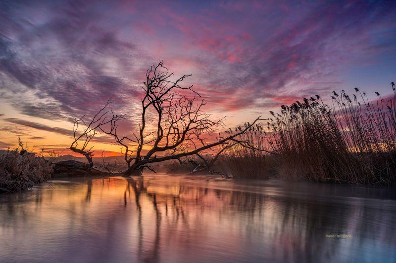 Wierzyca River, Kociewie, Poland, landscape, sunrise, clouds, sky, tree Wierzyca River фото превью