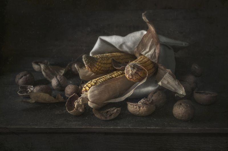 кукуруза,жёлтый,тёмный,деревенский,пыль,старая,орехи Старая кукурузаphoto preview