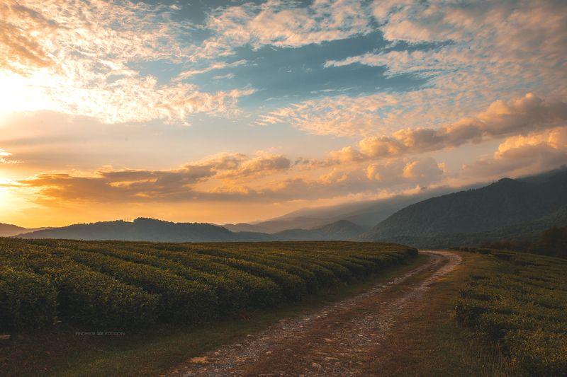 чай пейзаж закат дорога облака небо сочи Закат над чайными плантациямиphoto preview