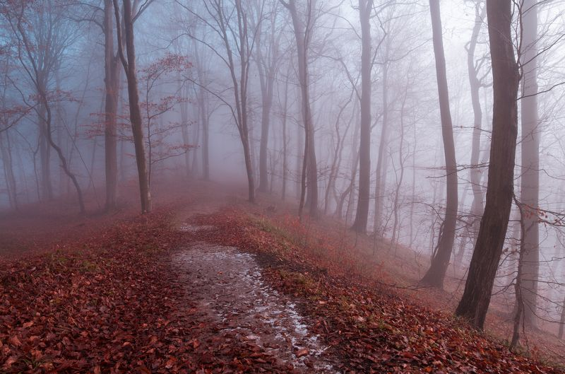 forest, snow, autumn, tree, pine, mountain, ***photo preview