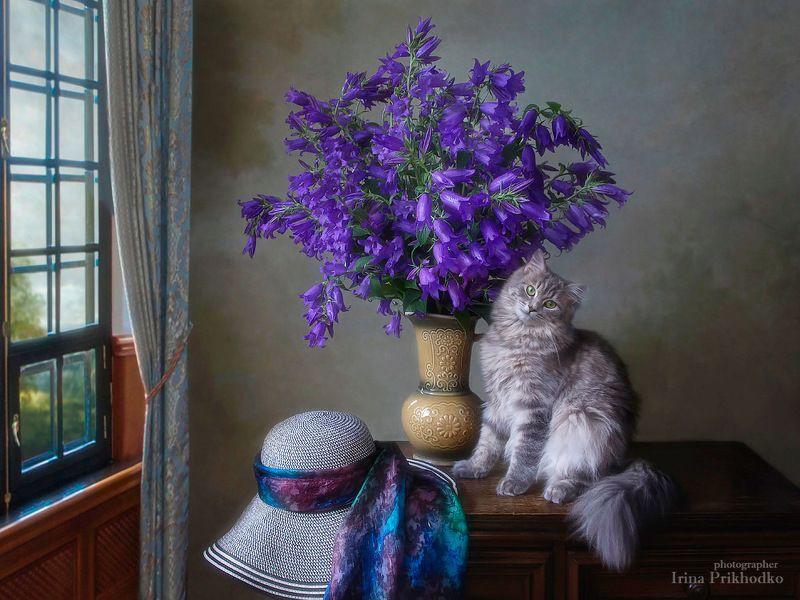 натюрморт, котонатюрморт, постановочное фото, кошка Масяня, домашние животные, букеты, колокольчики Натюрморт с колокольчиками и моей чудесной Масянечкойphoto preview
