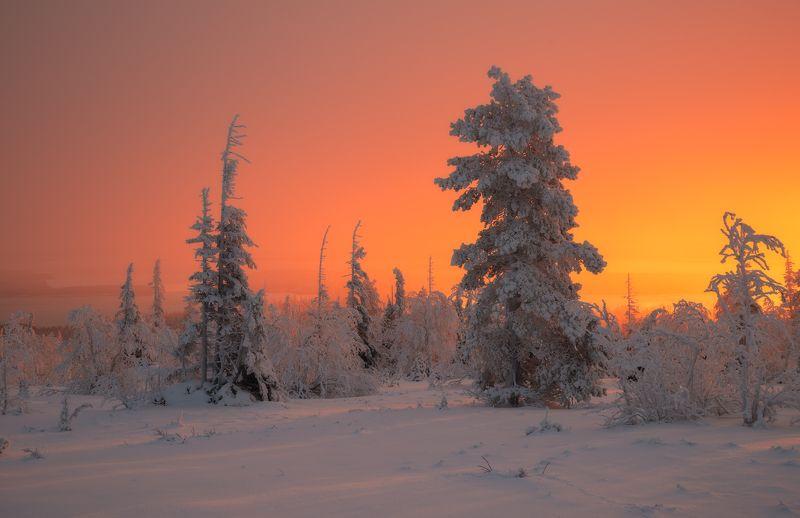 пейзаж,рассвет,лес,зима,снег,мурманская область,имандра,апатиты,кировск,хибиногорск,север photo preview