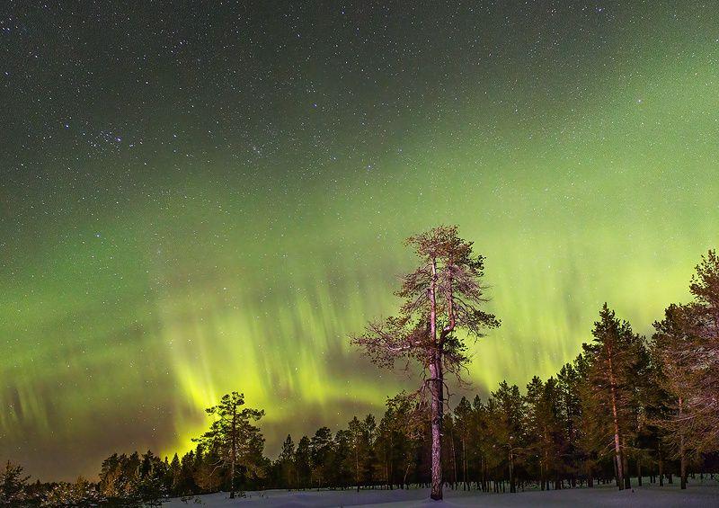 печора,.коми,север,природа,аврора,северное сияние,снег,pechora,komi,north,nature,aurora,northern , Краски Севераphoto preview