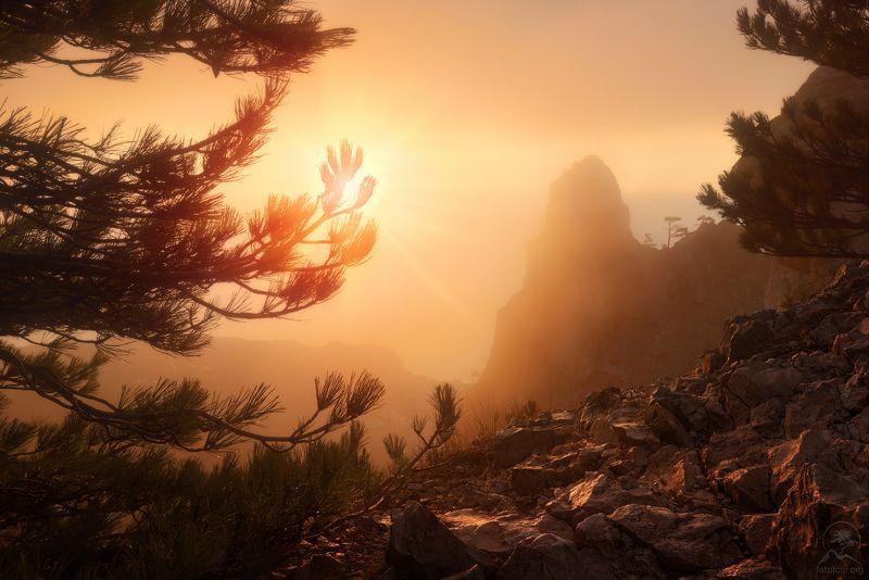 крым, горы, море, дерево Утро на Ай-Петриphoto preview