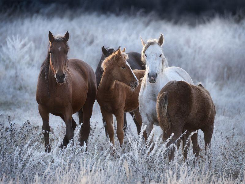 иней, лошади, осень, алтай Семейные узыphoto preview