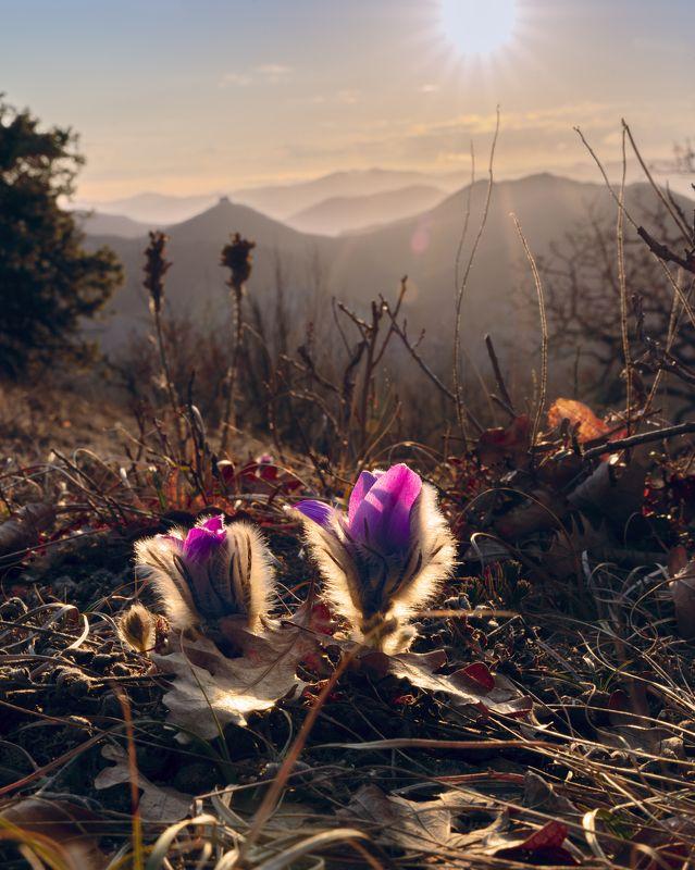 Сон про сон-травуphoto preview