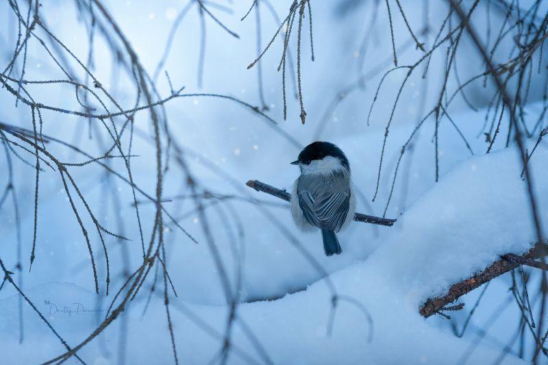 природа, лес, поля, огороды, животные, птицы, макро Уютный уголокphoto preview