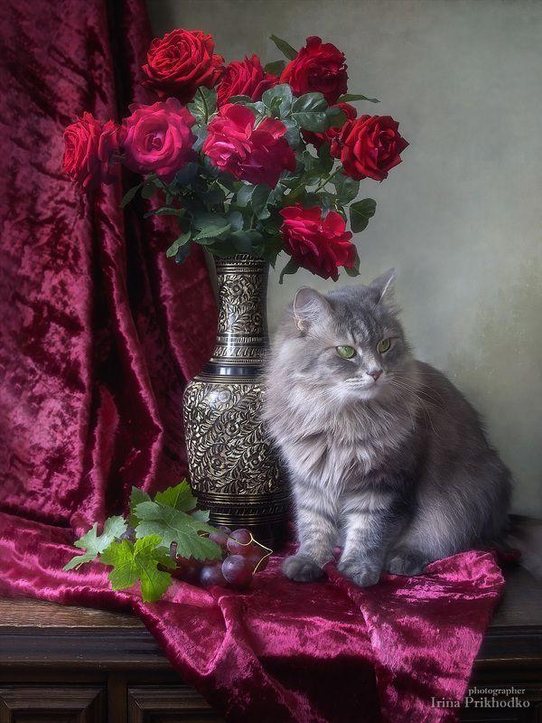 натюрморт, художественная фотография, котонатюрморт, домашние животные, кошка Масяня, букеты, цветы, розы Портрет Масянечки на фоне розphoto preview