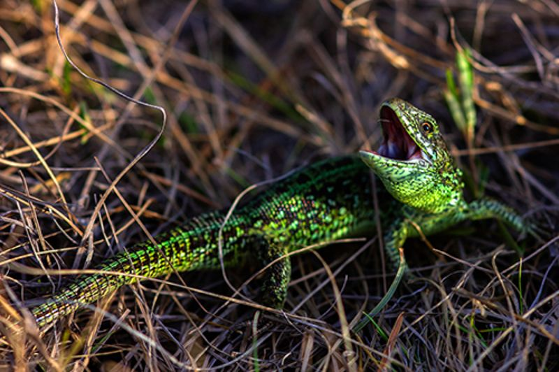 животные, рептилии, ящерицы, природа, животный мир Уберите камеруphoto preview