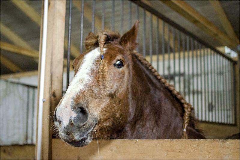 конь Модный конь Лёхаphoto preview