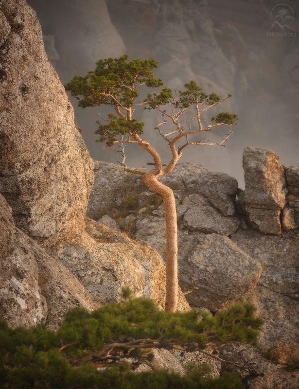 крым, горы, дерево Горный жительphoto preview