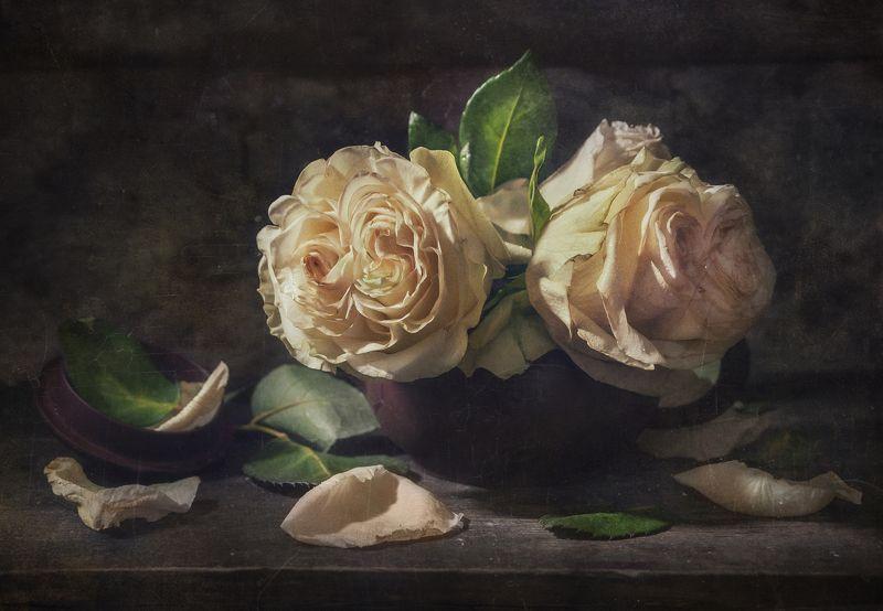 цветы,горшочек,трещины,пыль,розы,лепестки,текстура Ах...Эти Розы !photo preview