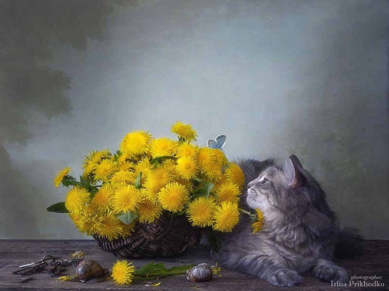 натюрморт, цветы, весна, одуванчики, котонатюрморт, кошка Масяня, питомцы, улитки Про пушистиковphoto preview