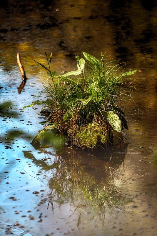 болото кочка природа трава солнце листья вода отражение Болотная кочкаphoto preview