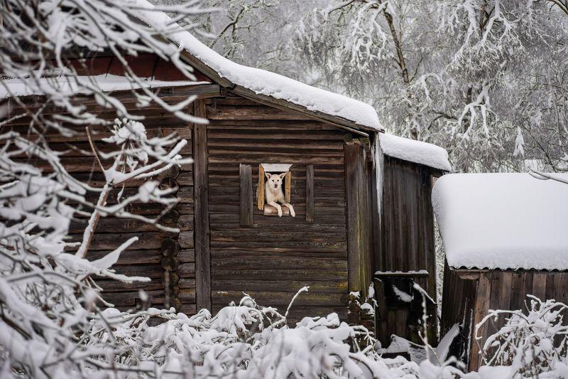 собака, деревня, зима, пейзаж, животное, белый, снег, animal, winter, dog, village Наблюдательный пункт.photo preview