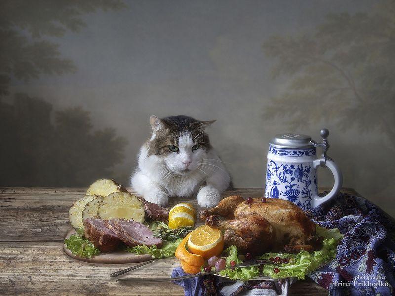 постановочная фотография, кот Лёва, еда, домашние животные - Иди ко мне, моя прелесть!photo preview
