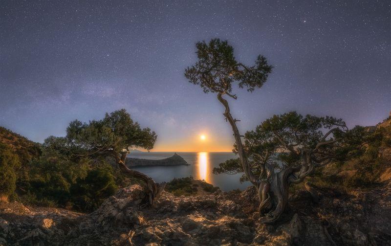 крым, новый свет, ночь, луна, танцы, можжевельник, март Танцы при лунеphoto preview