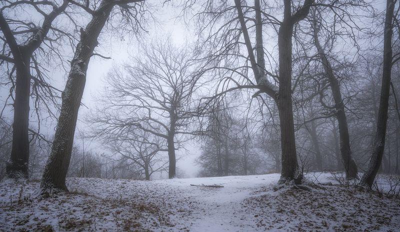 утро, туман, лес Дерева.photo preview