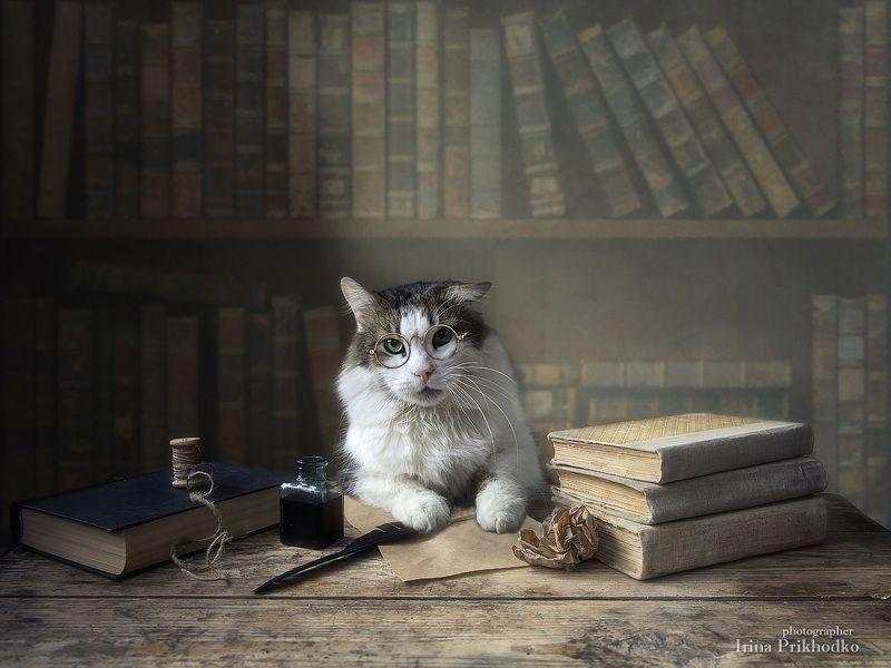 постановочная фотография, кот Лёва, книги, домашние животные Вдохновение пропало...photo preview