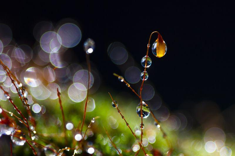 макро, утро, лето, роса, мох,лес, природа Утроphoto preview