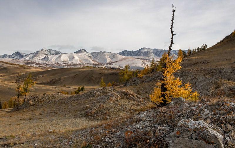 алтай, северо-чуйский хребет., осень. Алтайская осень.photo preview