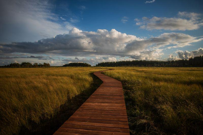 пейзаж, болото, природа, небо, облака, путь, заказник, nature, landscape, ecology Экотропа Сестрорецкое болото.photo preview