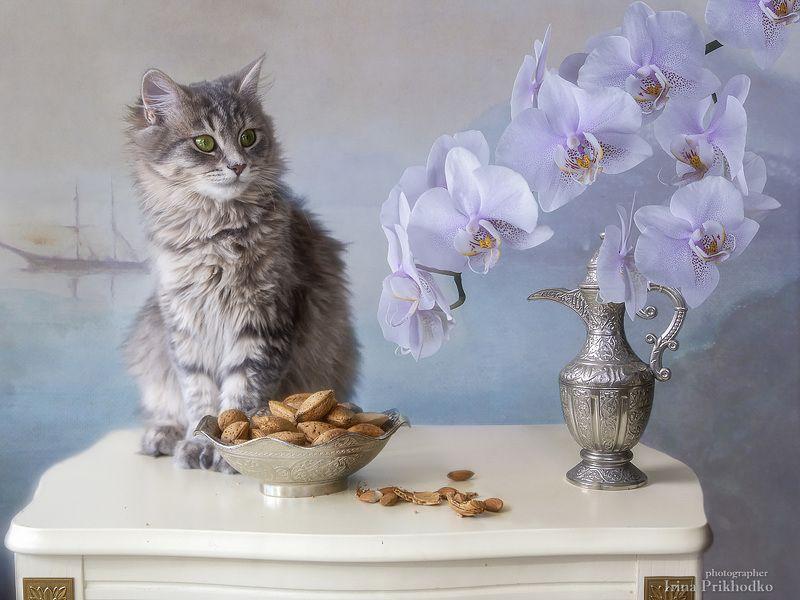 натюрморт, постановочное фото, домашние животные, котонатюрморт, кошка Масяня, орхидея, цветы Натюрморт с веткой цветущей орхидеи и любопытной кошечкойphoto preview