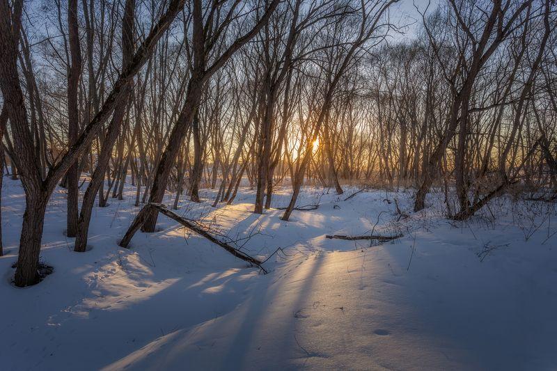 закат, март, природа, весна, ранняя весна, Московская область, пейзаж Весенний закатphoto preview