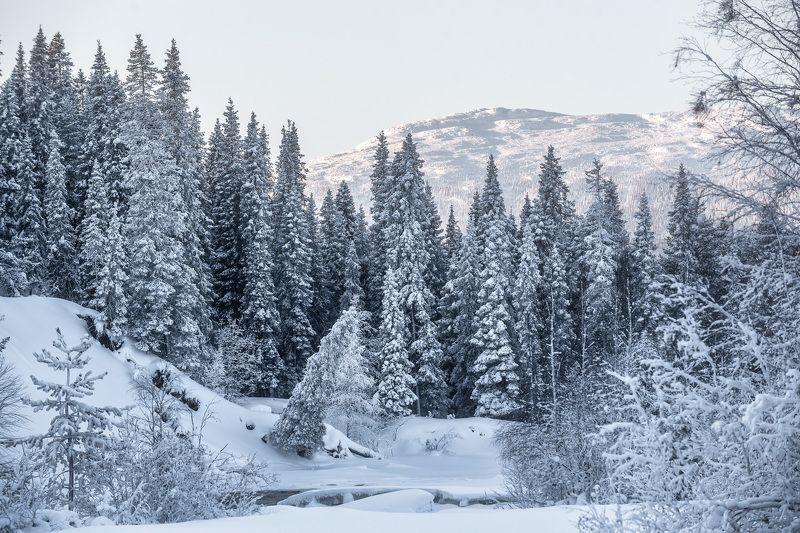 колвица, зимний пейзаж, заснеженный лес В зимнем убранствеphoto preview