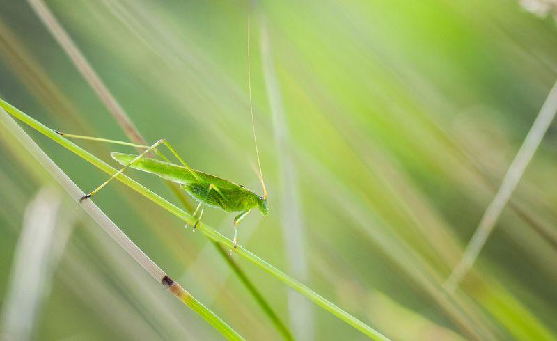 макро, природа, насекомое, макрофото, зеленый, green, macro, insect, nature Пластинокрыл.photo preview