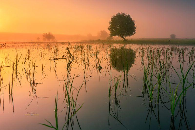 kociewie, poland, landscape, sunrise, water, pond, tree  фото превью