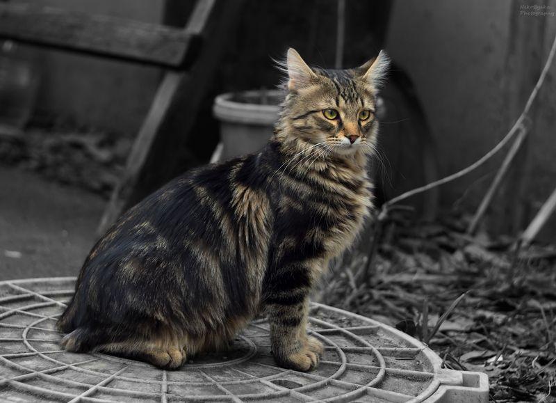домашние животные, животные, кот, коты, котенок, pets, animals, cat, cats, kitten, Масяphoto preview