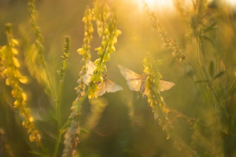 макро, бабочка Не спугните тишинуphoto preview