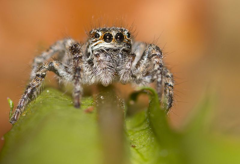 spider   spider  ....photo preview