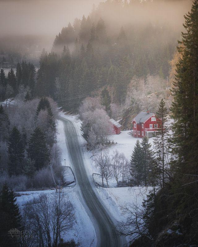 forest,woods,woodland,boreal,norway,norwegian,scandinavia,scandinavian,misty,foggy,fog,morning,dark,moody, Woodland in fogphoto preview