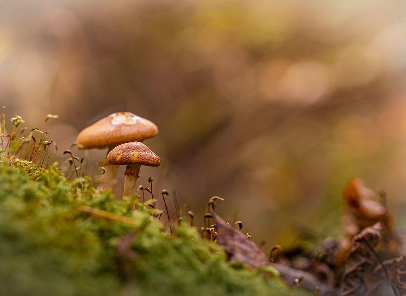 макро,природа Про грибыphoto preview