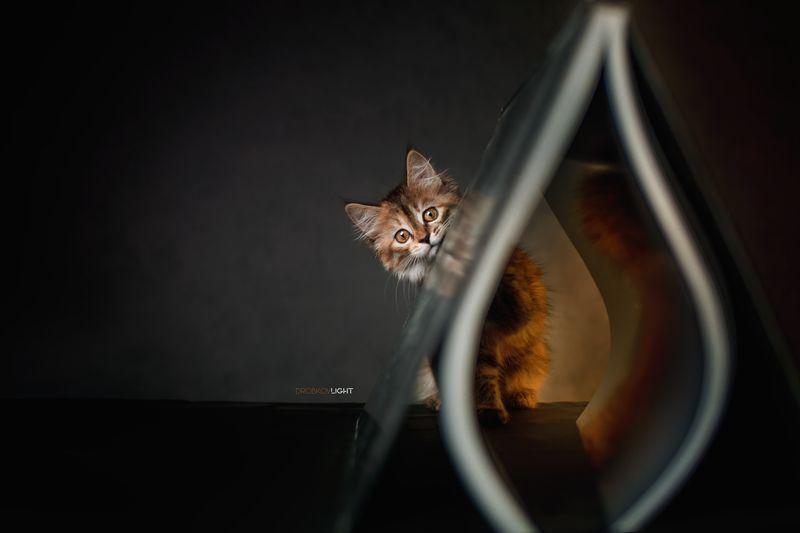портрет, portrait, кошка, cat, хочуlightфото Флешкаphoto preview